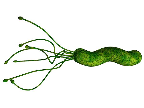 o_helicobacter-pylori