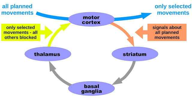 basal-ganglia-dbs-figure-1