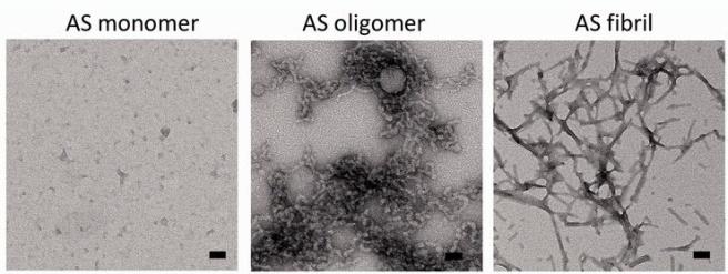 as-oligos