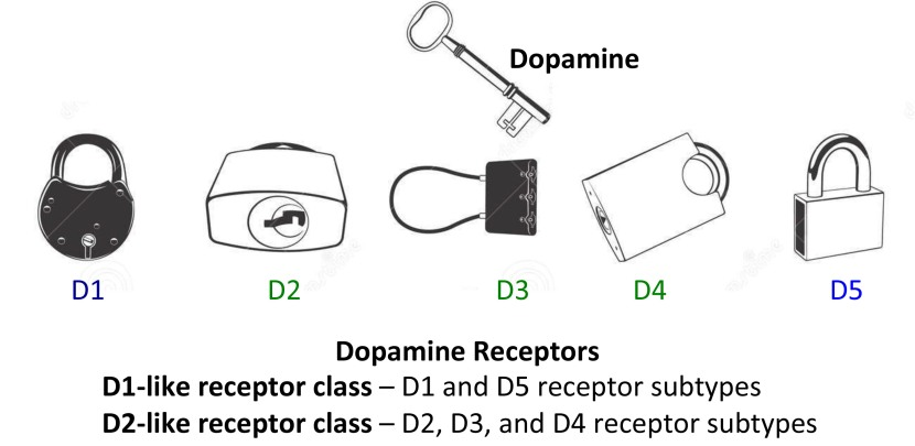 Dopamine | The Science of Parkinson's