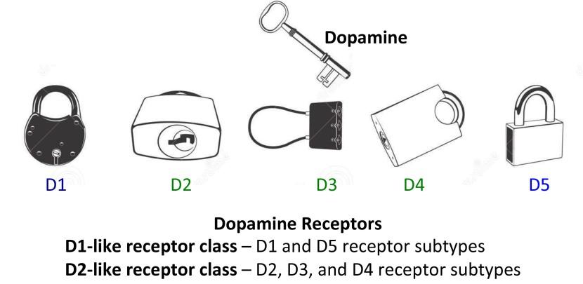 dopamine-receptors-150803