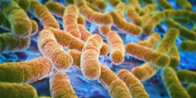 o-gut-bacteria-facebook