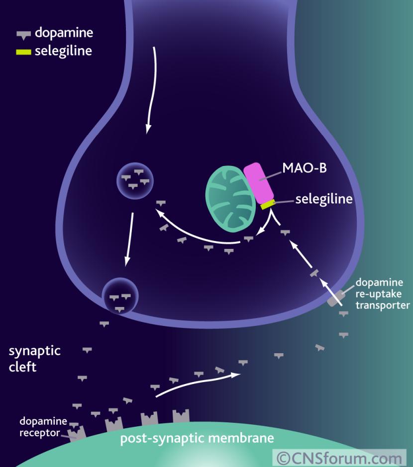maoi-inhibitor