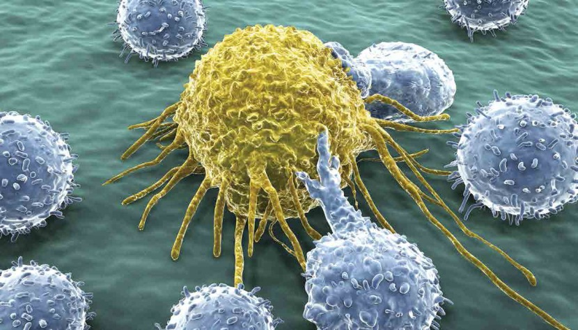 Cancer-Killing T-Cells