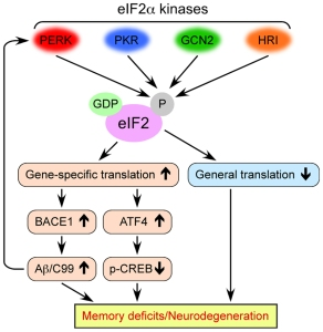 Roles of eIF2 kinases in the pathogenesis of Alzheimer's disease