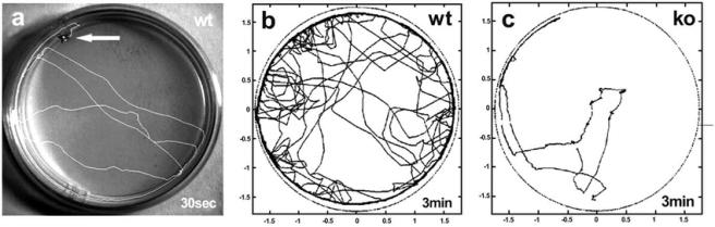 Fig-4-Experimental-study-of-Drosophila-locomotor-behaviour-a-An-adult-wild-type