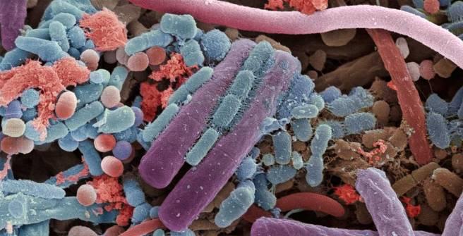 12-microbes.w710.h473.2x