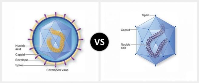 enveloped-virus-vs-non-enveloped-virus-990x495