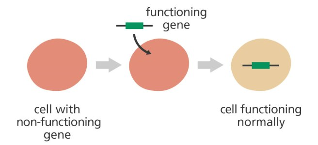 gene_therapy_augmentation_yourgenome