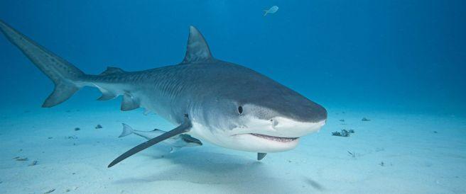 GTY_shark2_hb_160701_12x5_1600