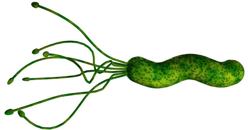 helicobacter-pylori-1