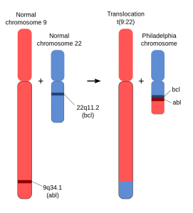 Schematic_of_the_Philadelphia_Chromosome.svg