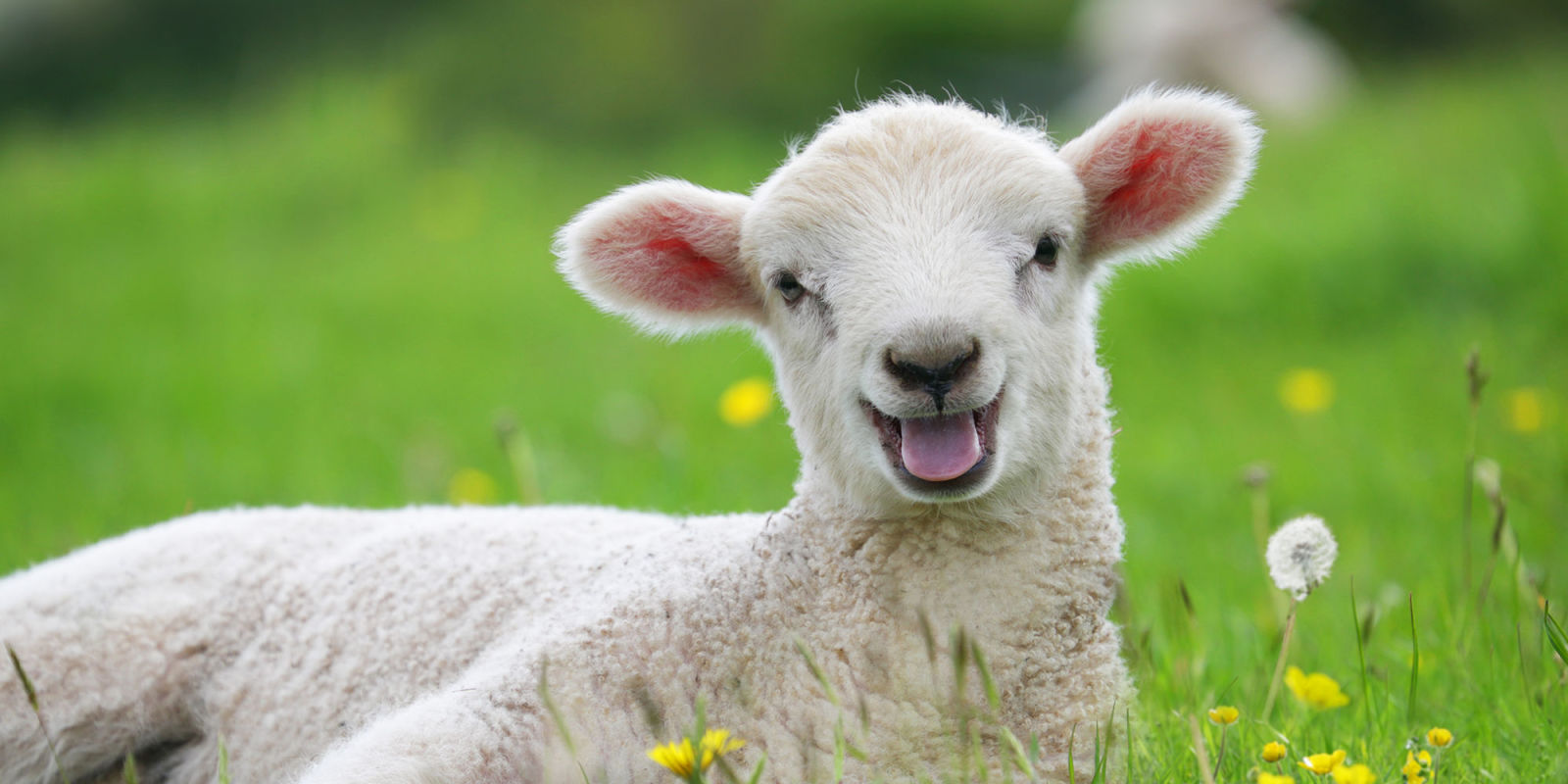 One black sheep per week | The Science of Parkinson's