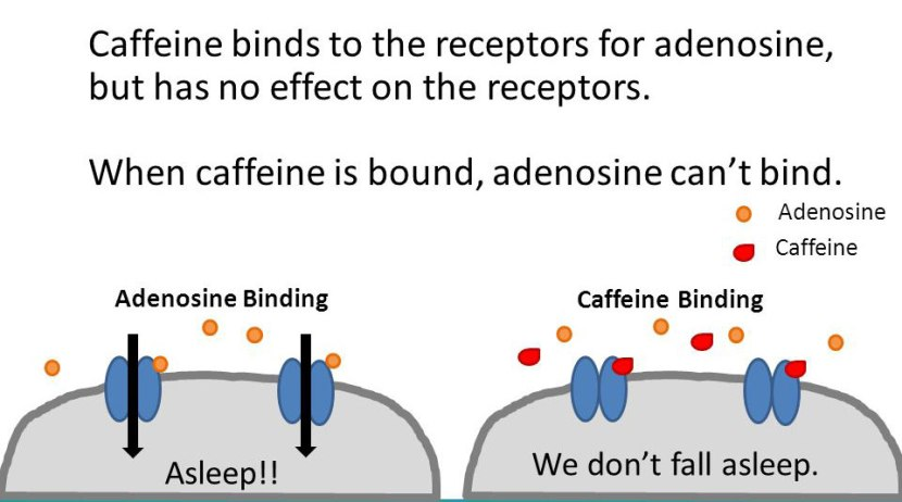 The mystery of caffeine | The Science of Parkinson's